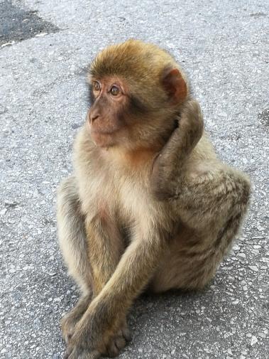 2_2018 Andalusia Gibraltarin apina